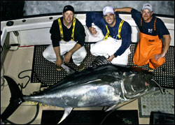 beautiful George's Bank giant bluefin tuna caught aboard the Hindsight